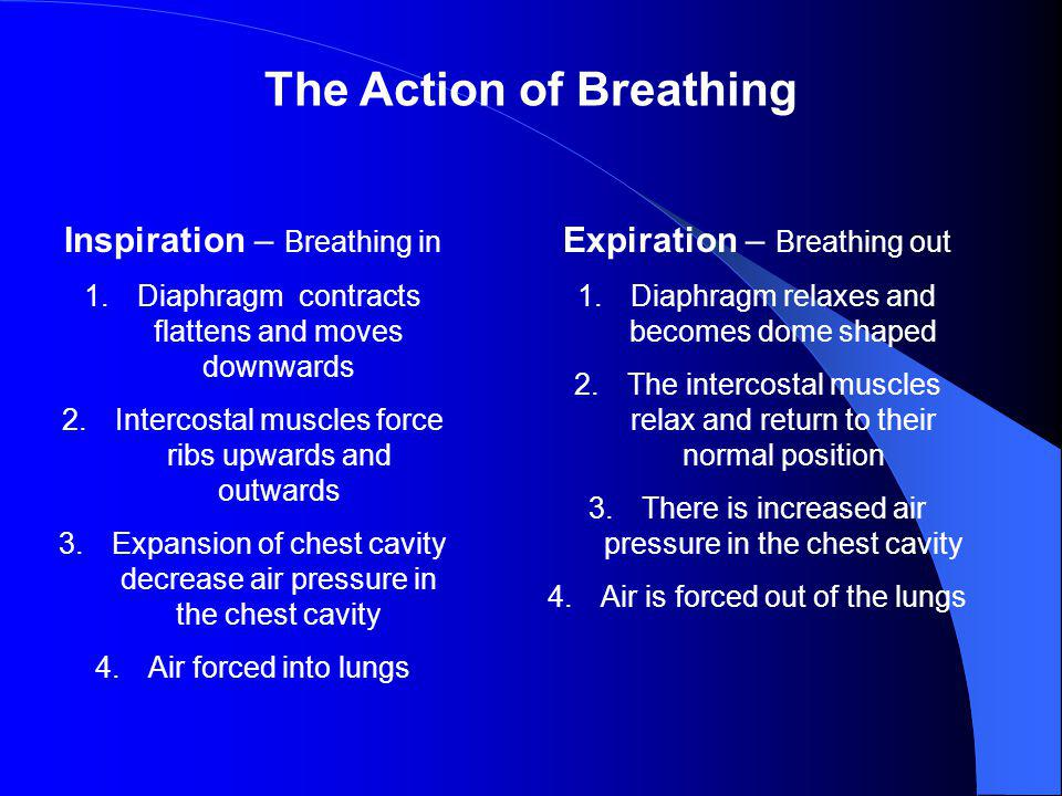 The Action of Breathing