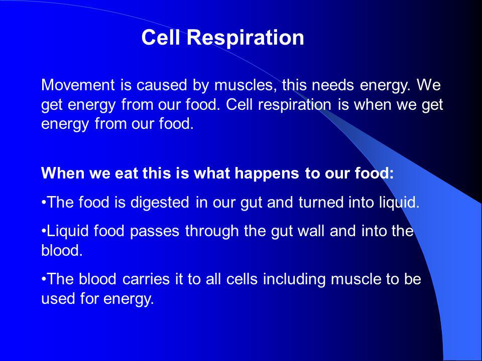 Cell Respiration Movement is caused by muscles, this needs energy. We get energy from our food. Cell respiration is when we get energy from our food.