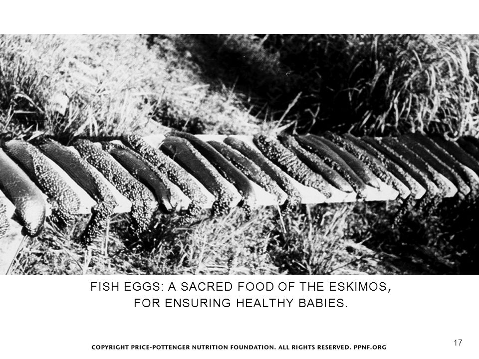 Salmon Roe FISH EGGS: A SACRED FOOD OF THE ESKIMOS,
