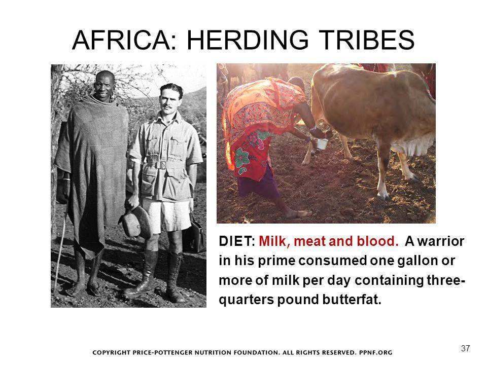 AFRICA: HERDING TRIBES