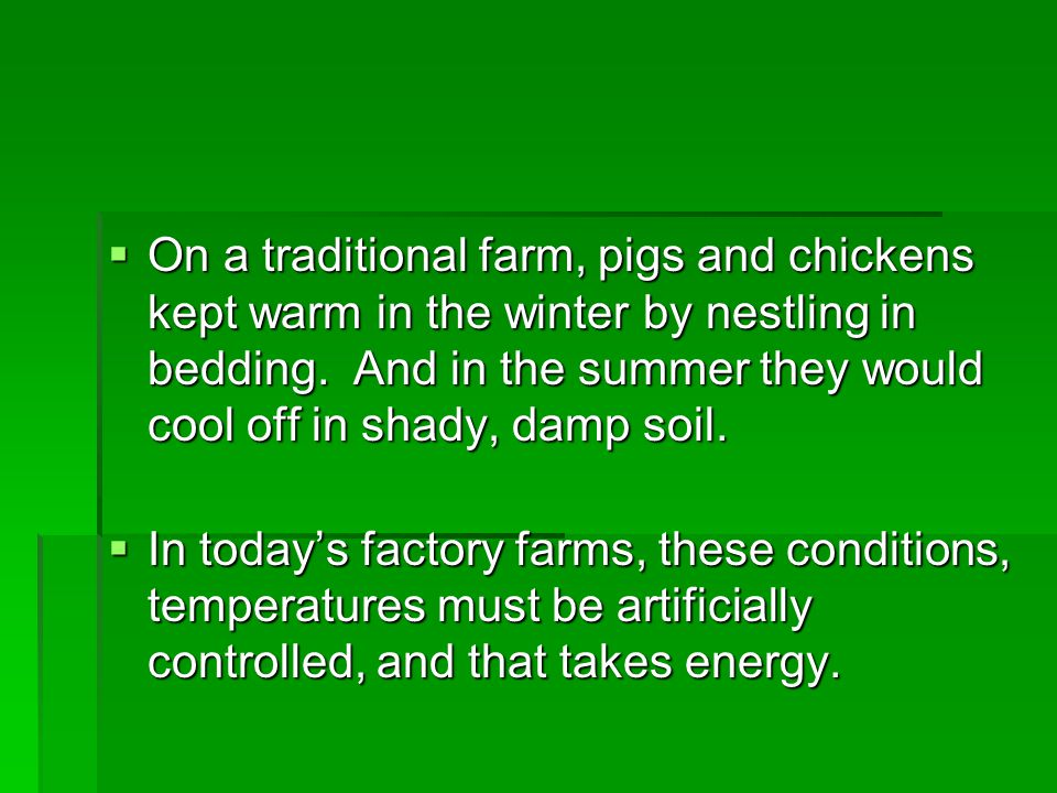 On a traditional farm, pigs and chickens kept warm in the winter by nestling in bedding. And in the summer they would cool off in shady, damp soil.