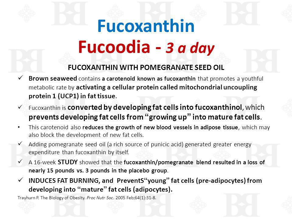 Fucoxanthin Fucoodia - 3 a day