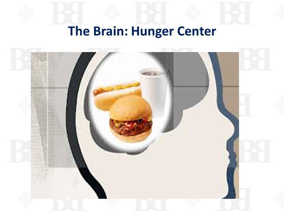 The Brain: Hunger Center