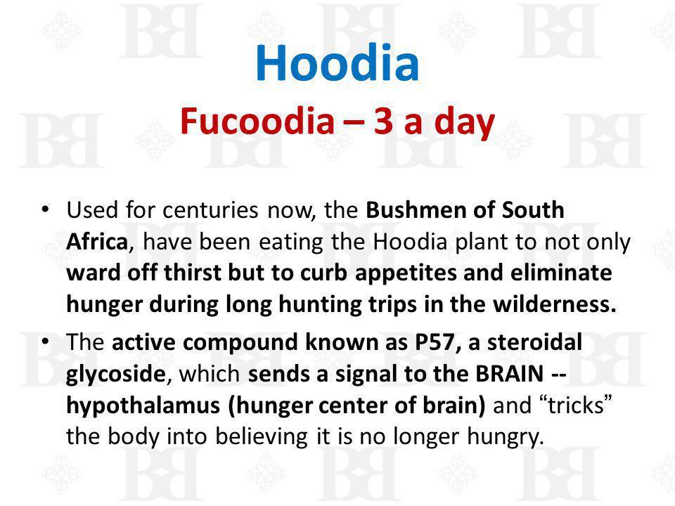 Hoodia Fucoodia – 3 a day