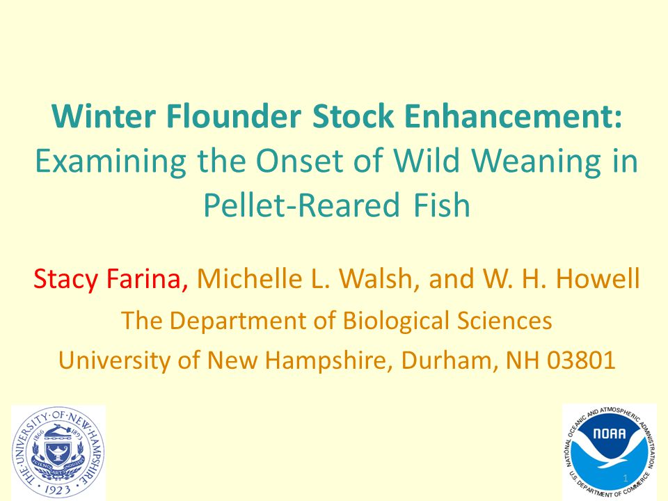 Winter Flounder Stock Enhancement: Examining the Onset of Wild Weaning in Pellet-Reared Fish
