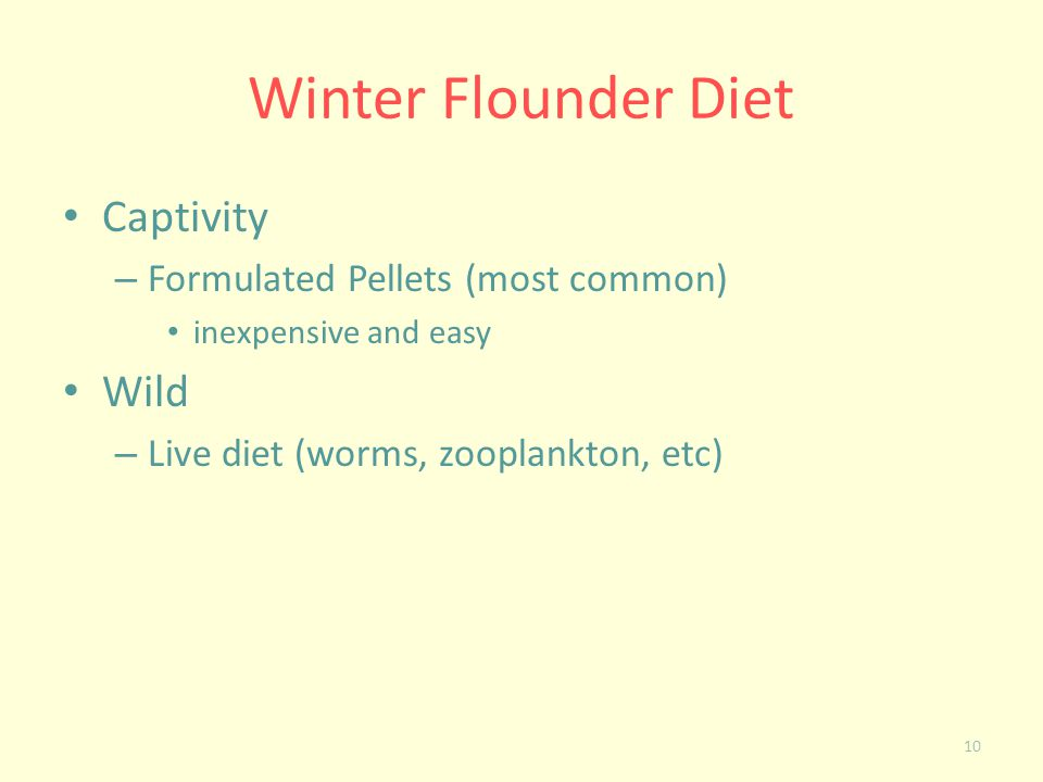 Winter Flounder Diet Captivity Wild Formulated Pellets (most common)