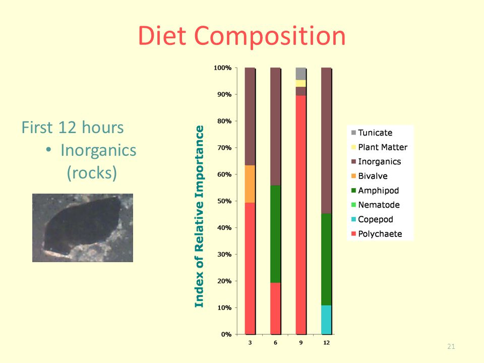 Diet Composition First 12 hours Inorganics (rocks)