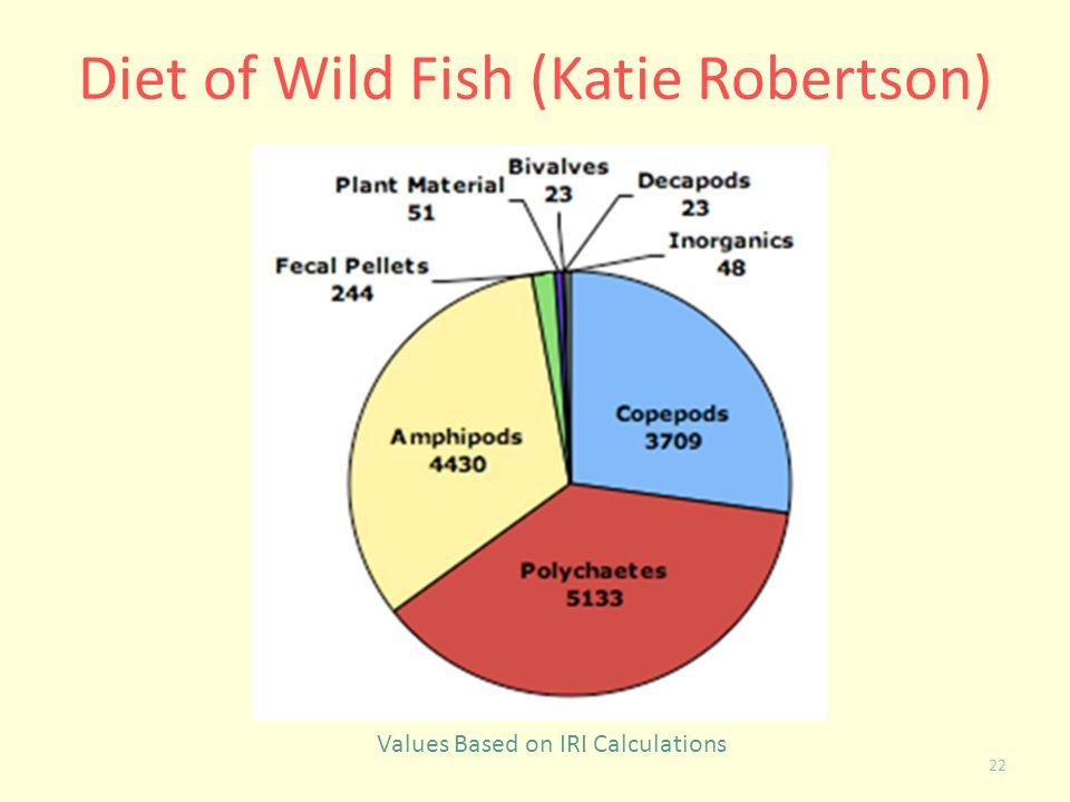 Diet of Wild Fish (Katie Robertson)