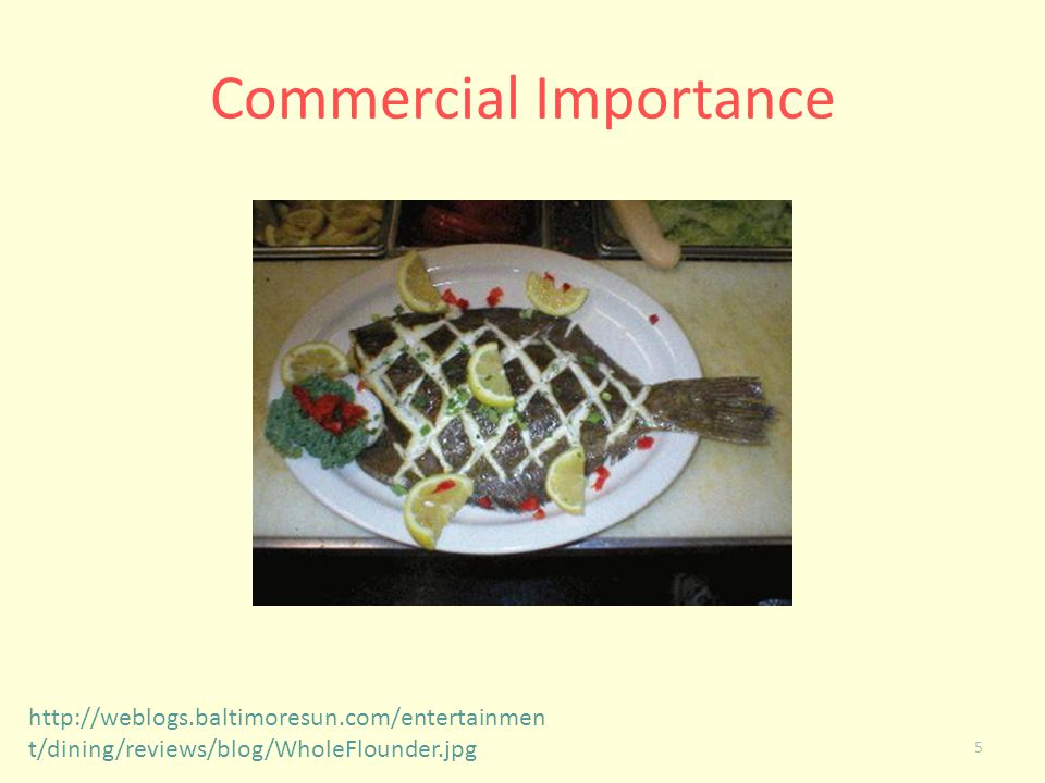 Commercial Importance