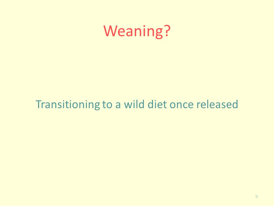 Transitioning to a wild diet once released