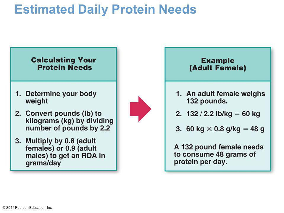 Estimated Daily Protein Needs