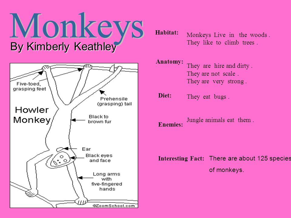 Monkeys By Kimberly Keathley Habitat: Monkeys Live in the woods .