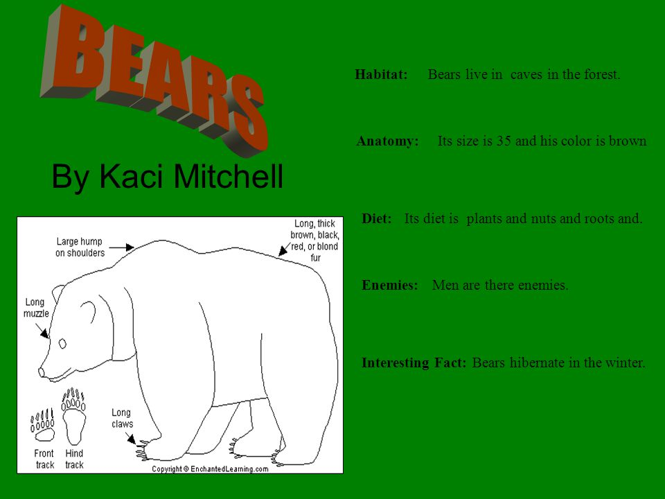 BEARS By Kaci Mitchell Habitat: Bears live in caves in the forest.