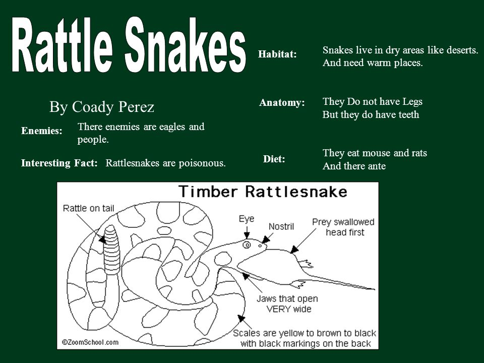 Rattle Snakes By Coady Perez Snakes live in dry areas like deserts.