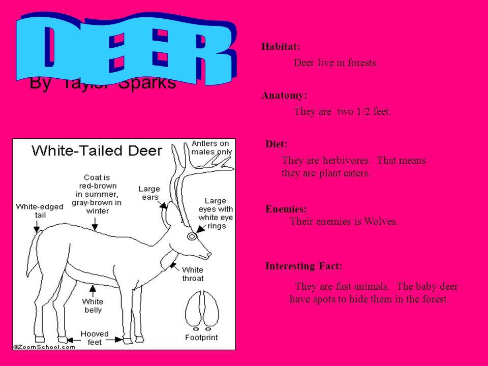 DEER By Taylor Sparks Habitat: Deer live in forests. Anatomy: