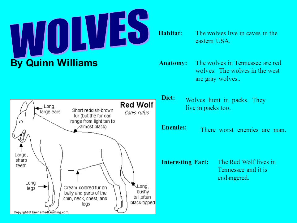 WOLVES By Quinn Williams Habitat: The wolves live in caves in the