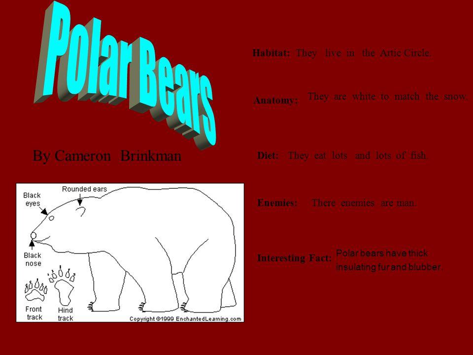 Polar Bears By Cameron Brinkman Habitat: