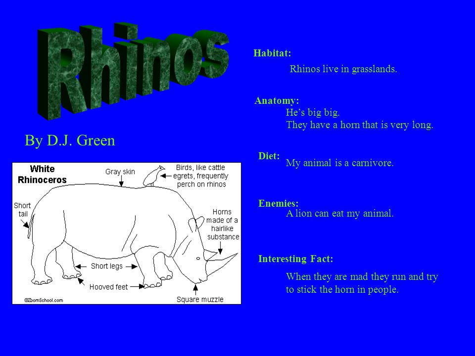Rhinos By D.J. Green Habitat: Rhinos live in grasslands. Anatomy: