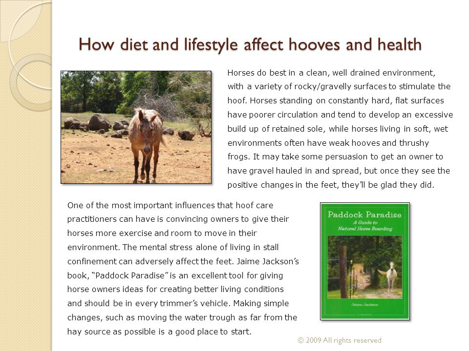 How diet and lifestyle affect hooves and health