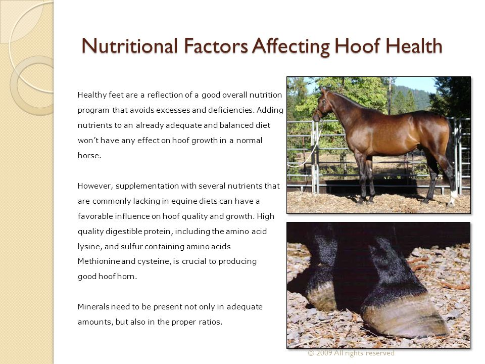 Nutritional Factors Affecting Hoof Health