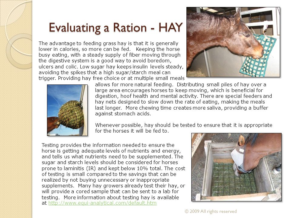 Evaluating a Ration - HAY