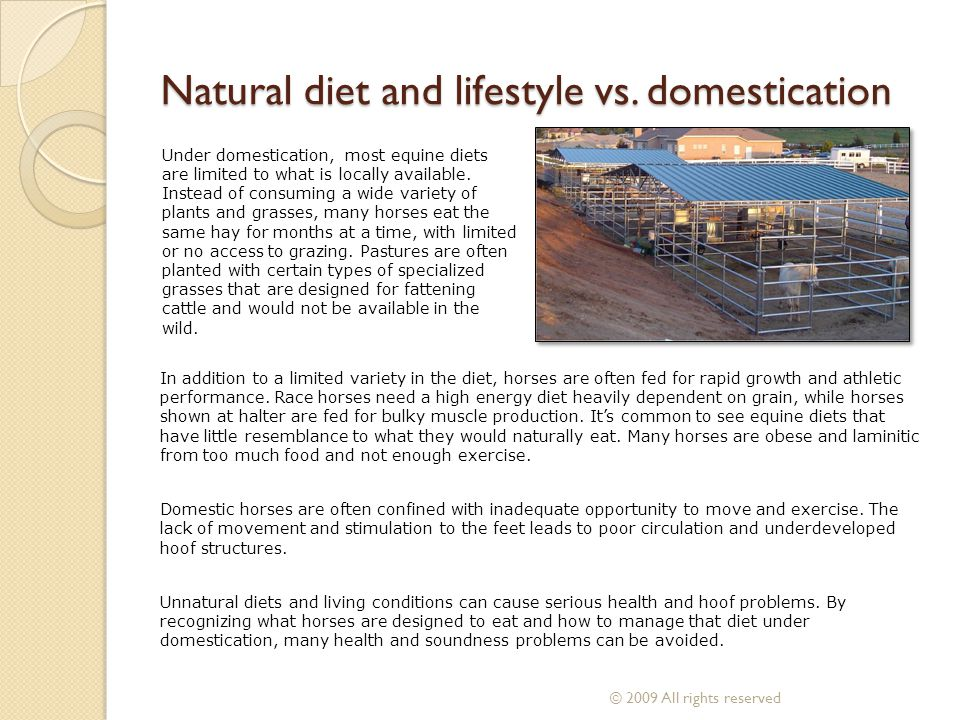 Natural diet and lifestyle vs. domestication