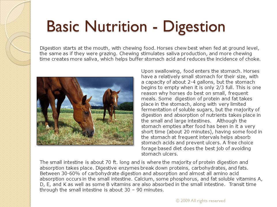 Basic Nutrition - Digestion