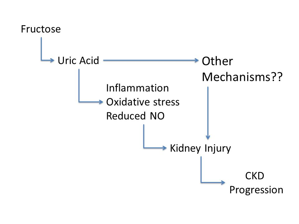 Other Mechanisms Fructose Uric Acid Inflammation Oxidative stress