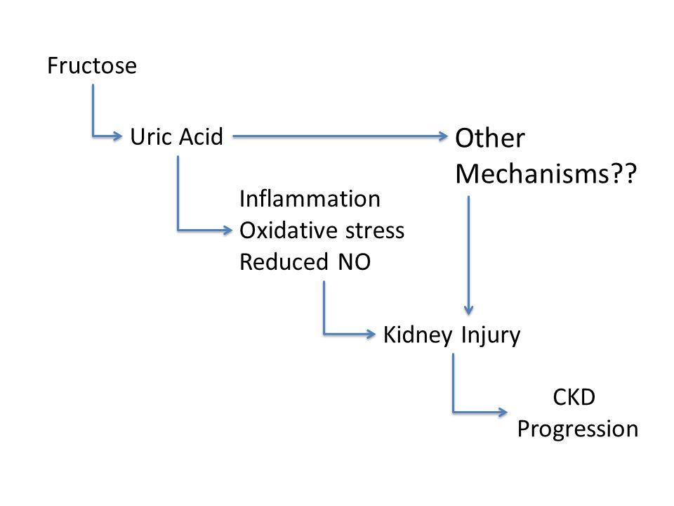 Other Mechanisms Fructose Uric Acid Inflammation Oxidative stress