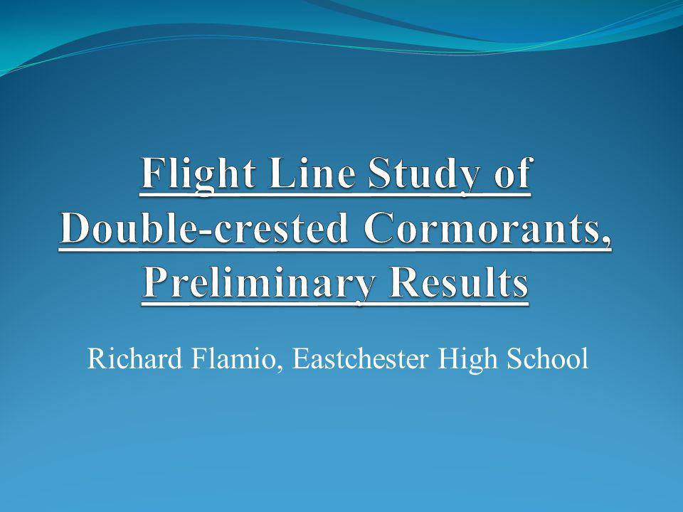Flight Line Study of Double-crested Cormorants, Preliminary Results