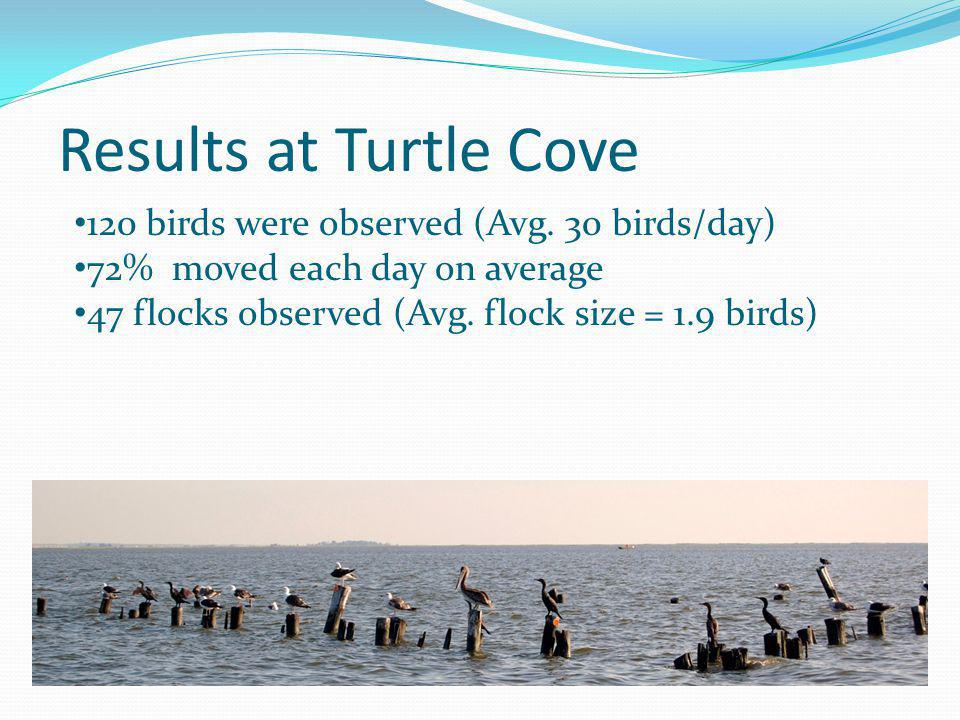 Results at Turtle Cove 120 birds were observed (Avg. 30 birds/day)