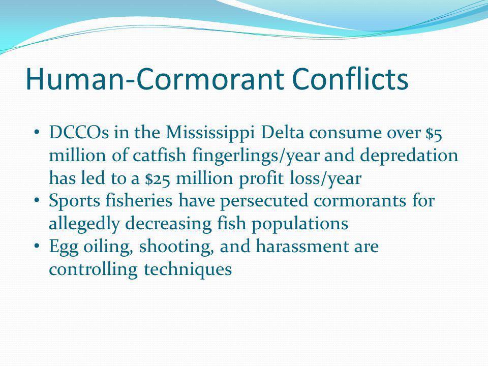 Human-Cormorant Conflicts