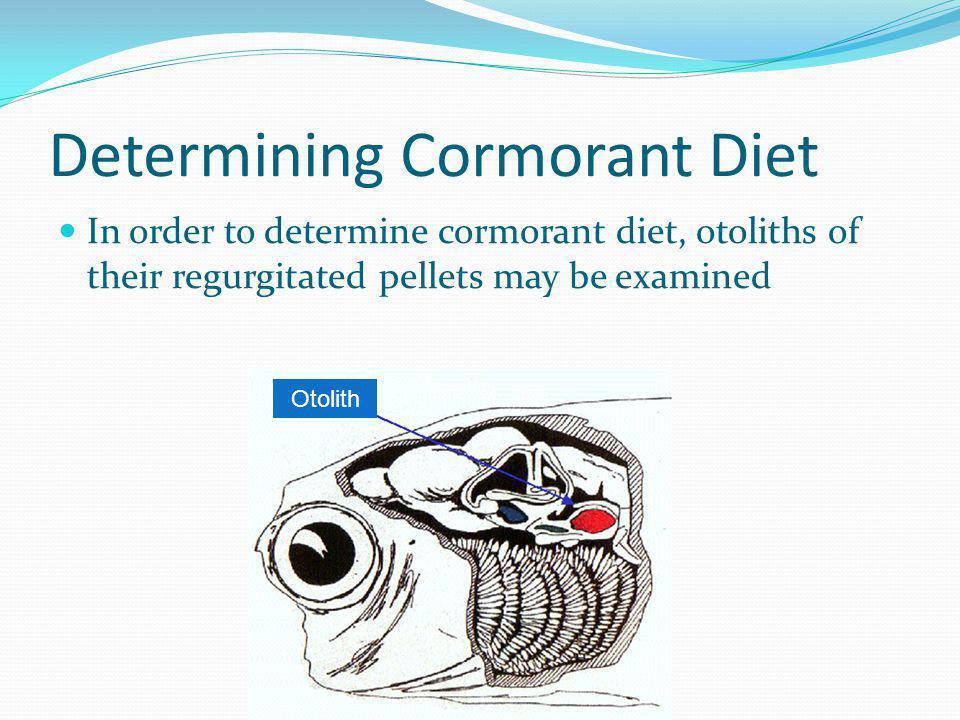 Determining Cormorant Diet