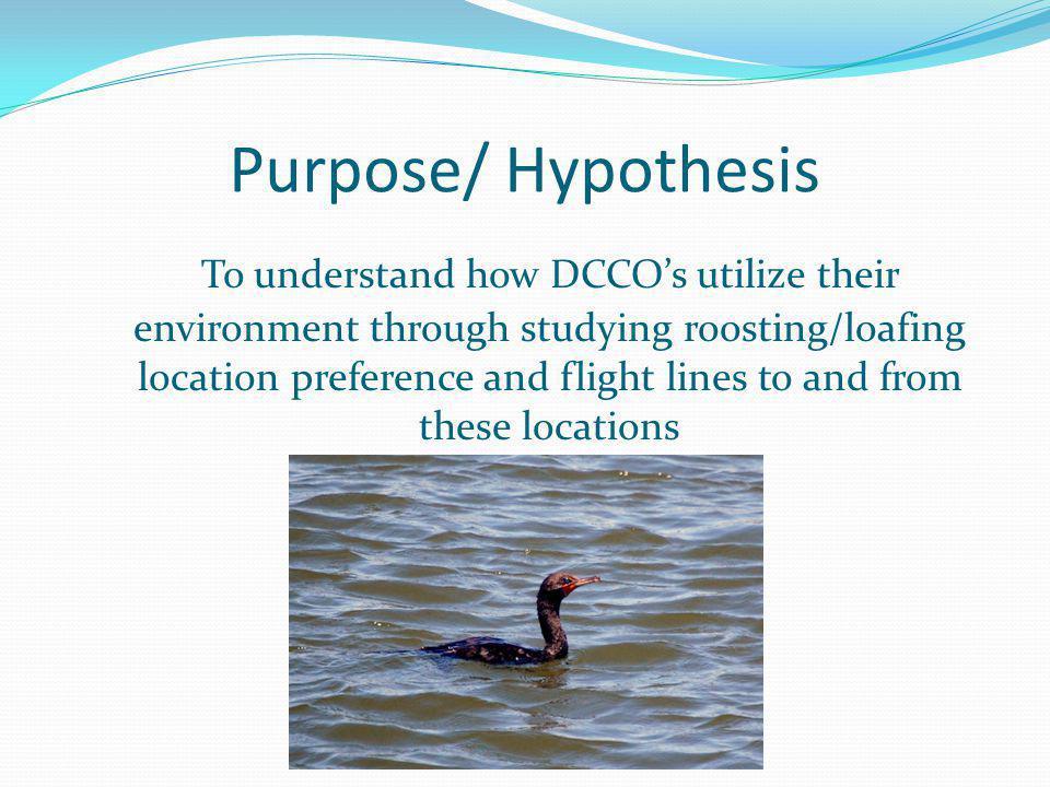 Purpose/ Hypothesis