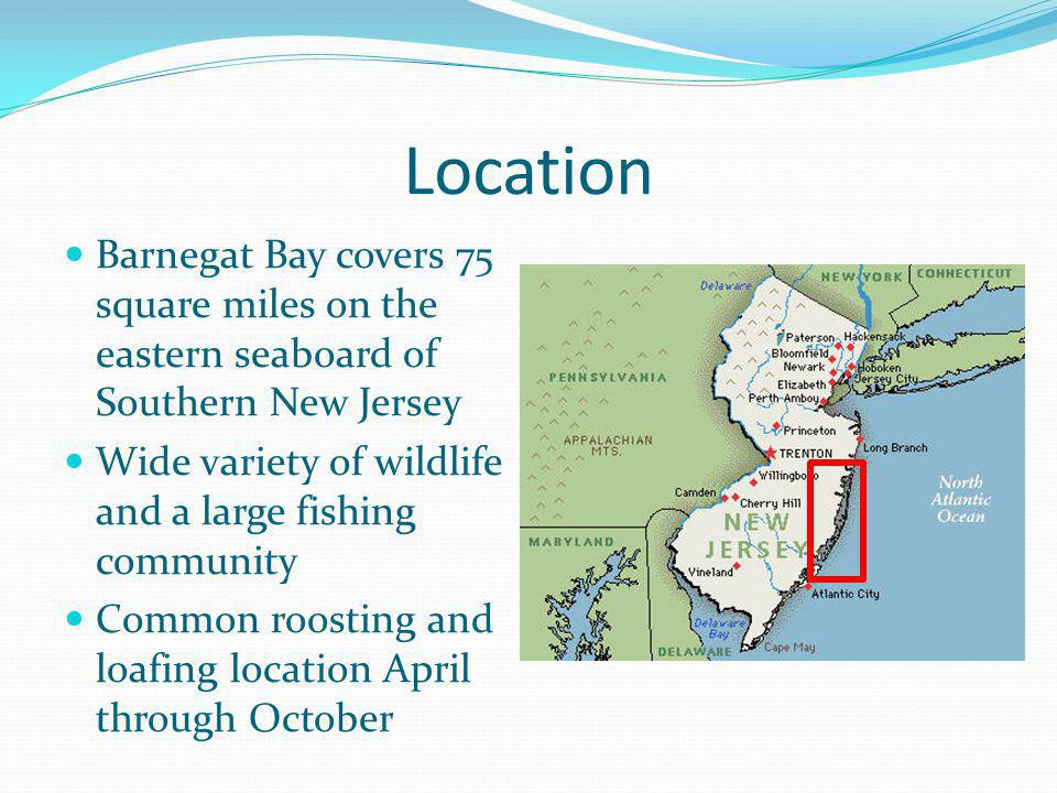 Location Barnegat Bay covers 75 square miles on the eastern seaboard of Southern New Jersey. Wide variety of wildlife and a large fishing community.