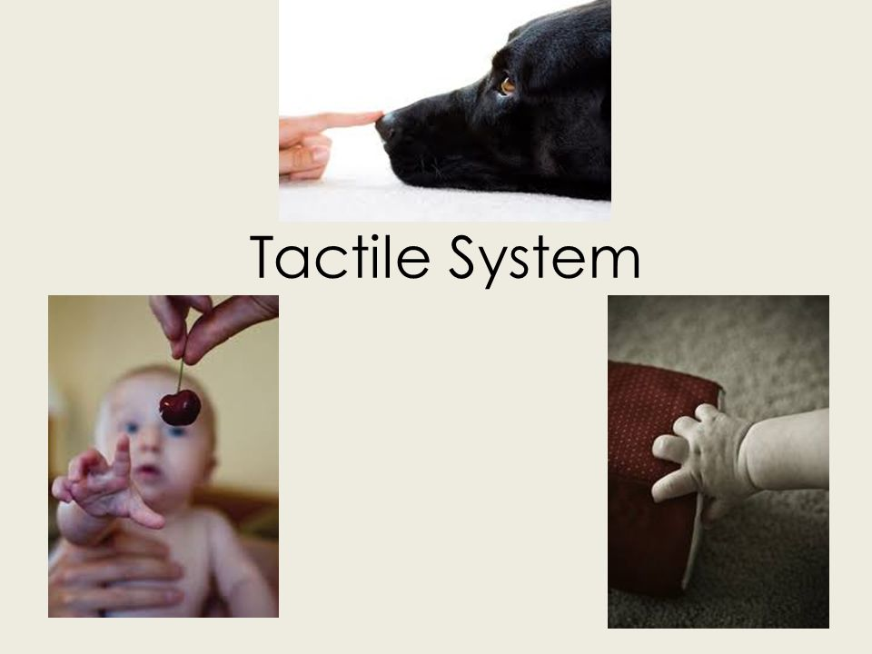 Tactile System