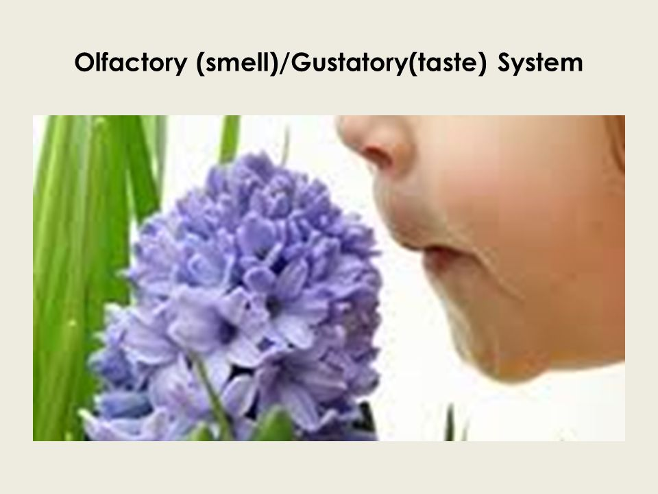 Olfactory (smell)/Gustatory(taste) System