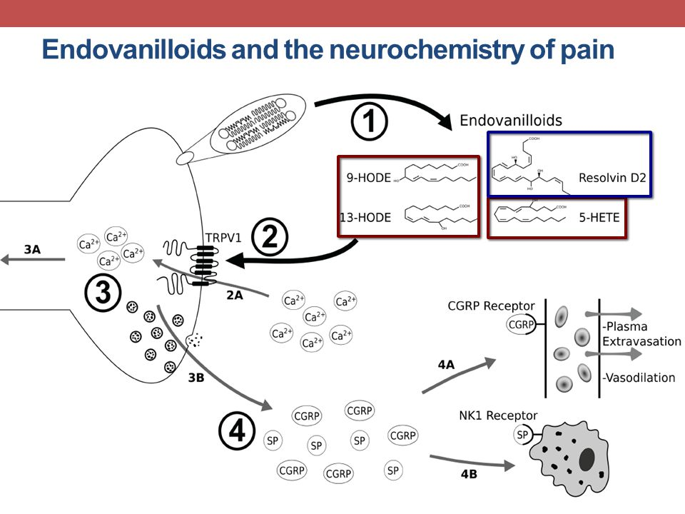Endovanilloids and the neurochemistry of pain