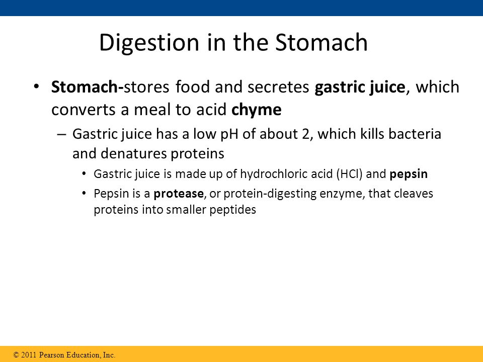 Digestion in the Stomach