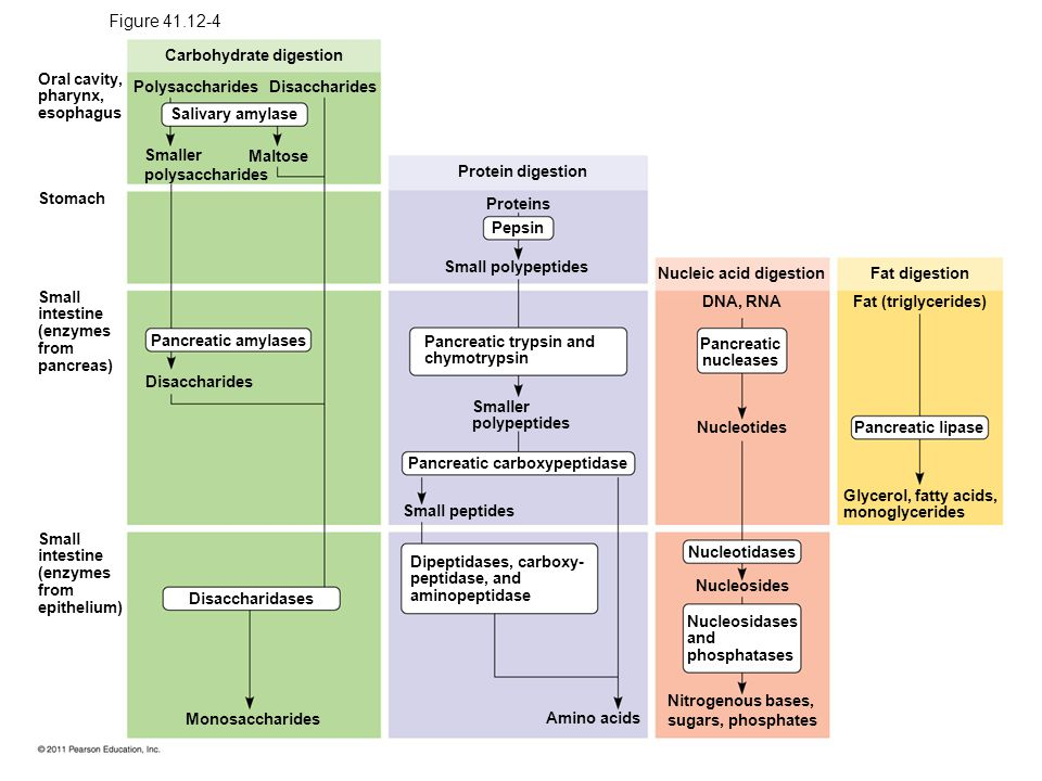 Figure 41.12 Chemical digestion in the human digestive system.