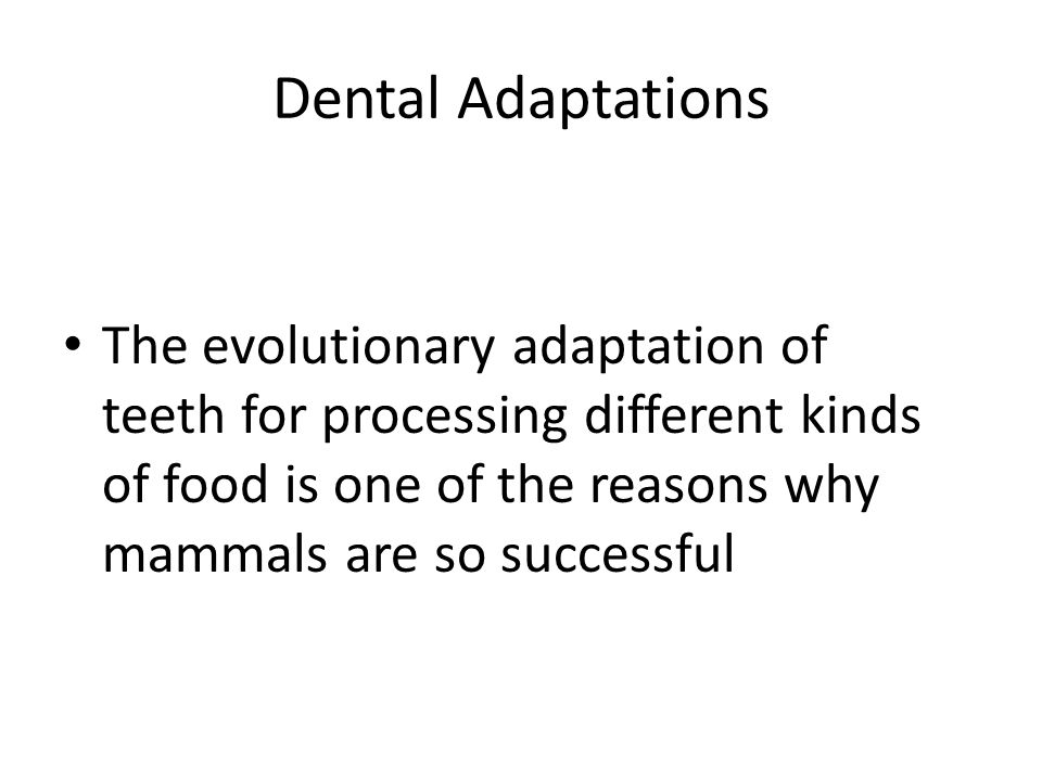 Dental Adaptations The evolutionary adaptation of teeth for processing different kinds of food is one of the reasons why mammals are so successful.