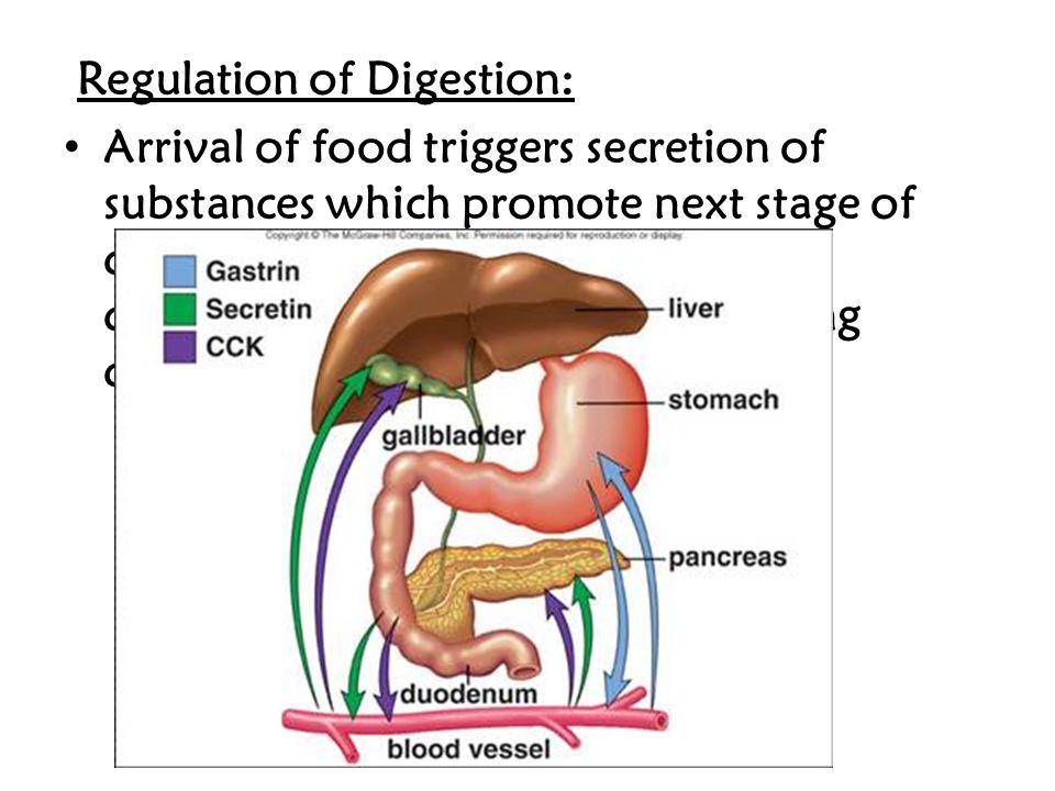 Regulation of Digestion: