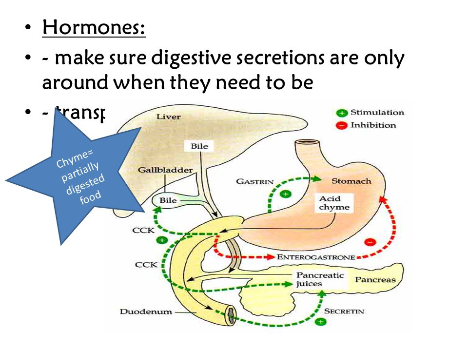 Chyme= partially digested food