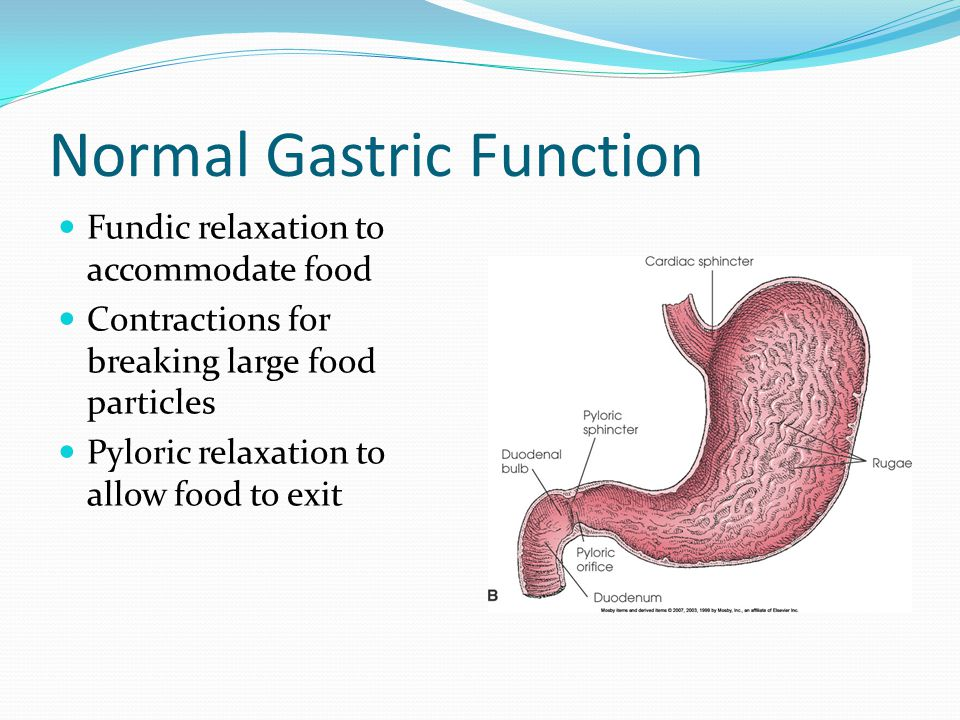 Normal Gastric Function