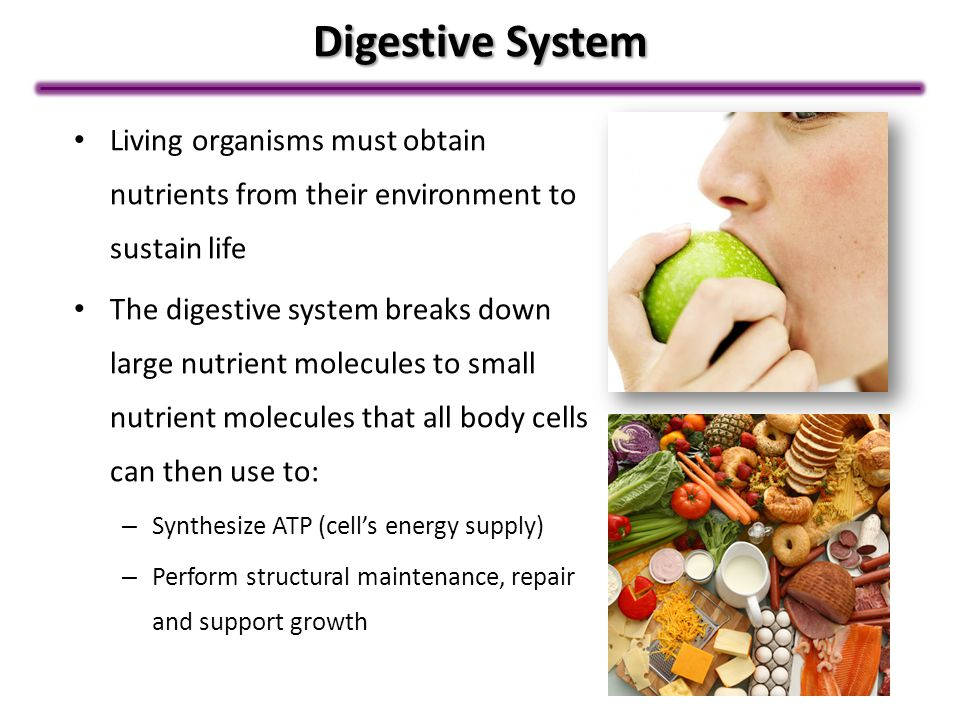 Digestive System Living organisms must obtain nutrients from their environment to sustain life.