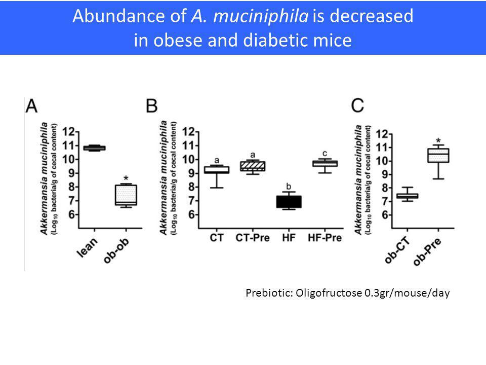 Abundance of A. muciniphila is decreased in obese and diabetic mice