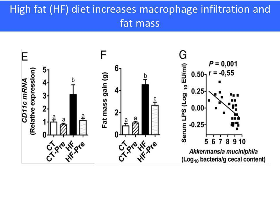 High fat (HF) diet increases macrophage infiltration and fat mass