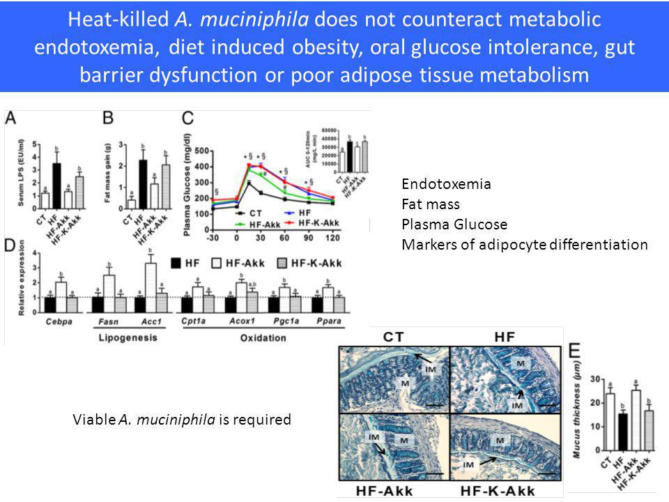 Heat-killed A. muciniphila does not counteract metabolic endotoxemia, diet induced obesity, oral glucose intolerance, gut barrier dysfunction or poor adipose tissue metabolism