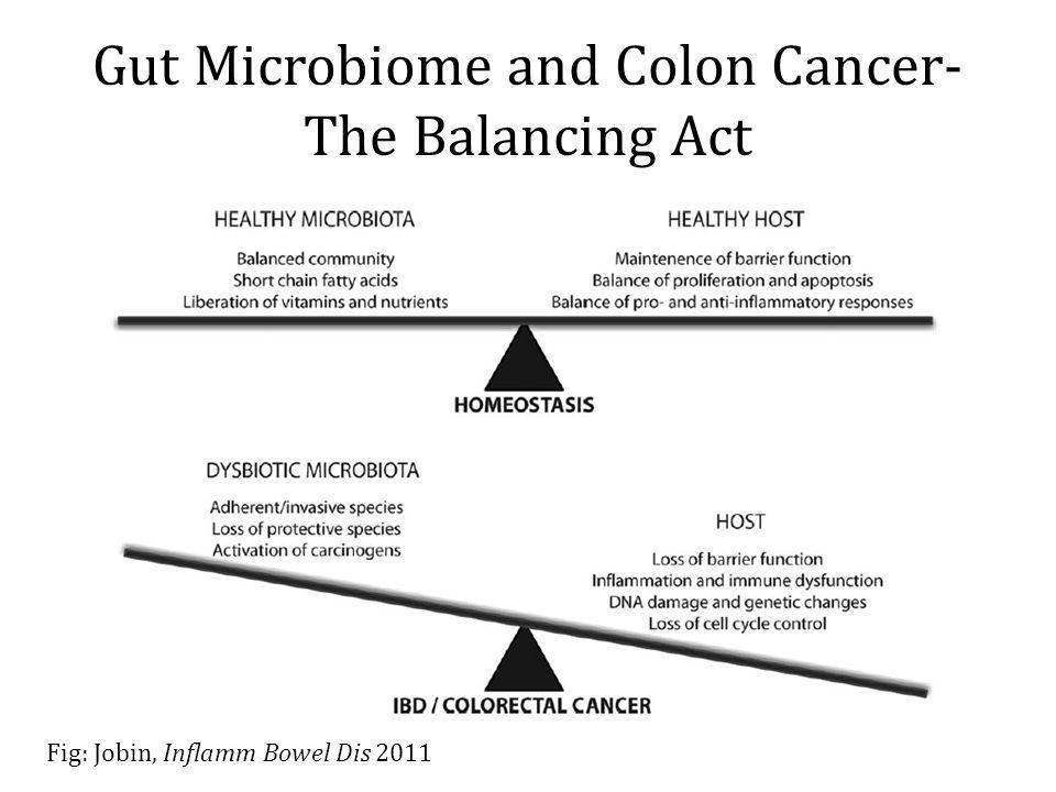 Gut Microbiome and Colon Cancer- The Balancing Act