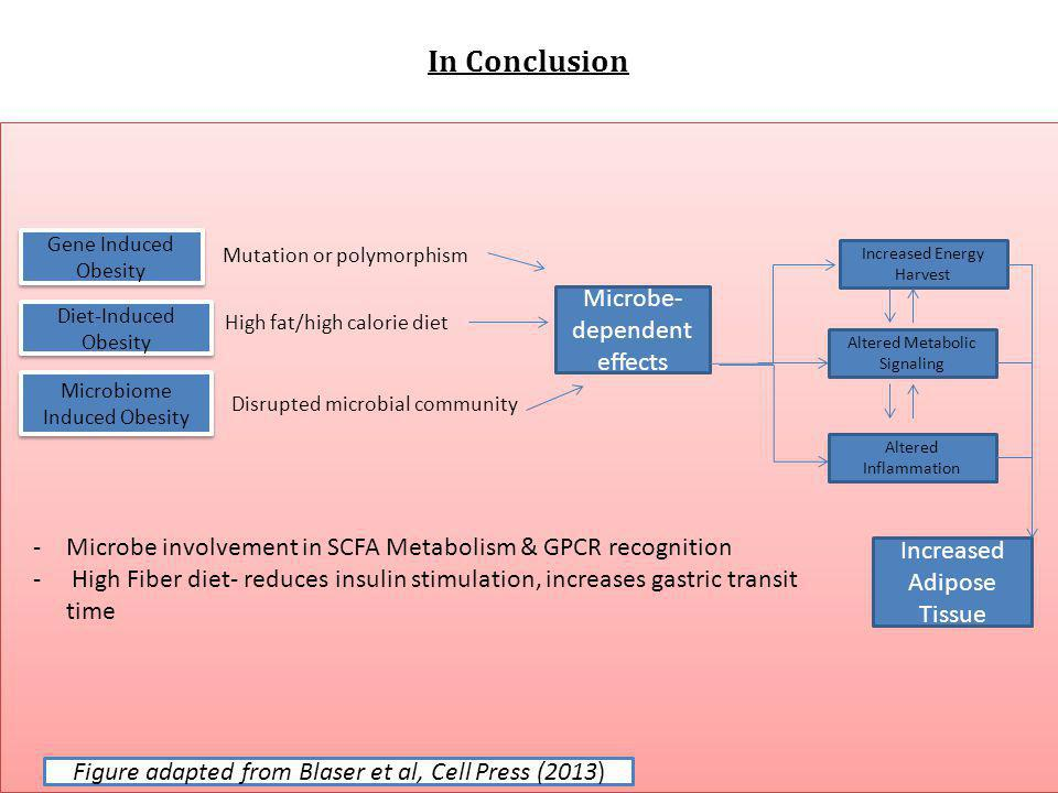 In Conclusion Microbe-dependent effects